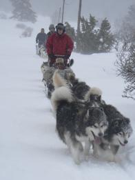 Leading a dog sled team