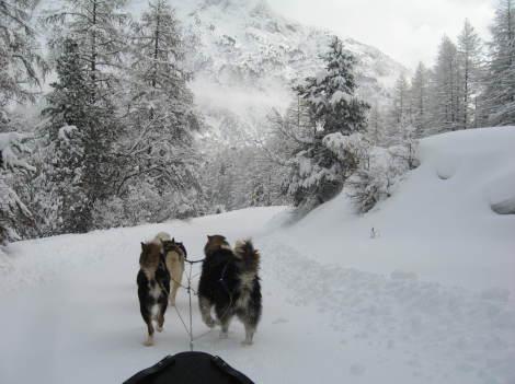 Dog sledding in Névache