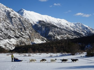 Dog sledding in Névache